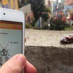 Video: Controlan cucarachas con aplicación para celulares