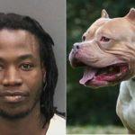 Mata a su perra Pitbull, luego la cocina y come