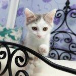 Abrirán hotel exclusivo para gatos en Francia