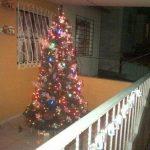 Los arbolitos de Navidad de los salvadoreños