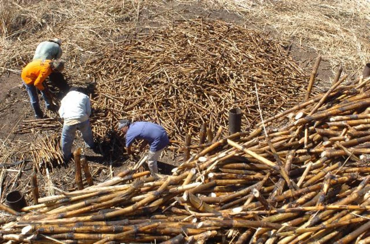 La agroindustria azucarera es catalogada como una de las mejores de Centroamérica. foto edh