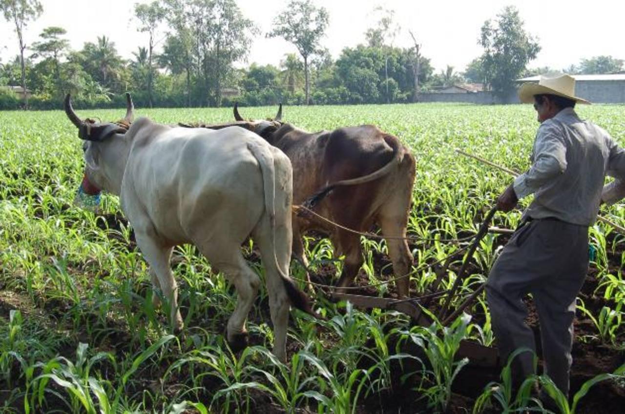 Guatemaltecos conocieron normas para exportar productos agrícolas a la UE. fotoedh/archivo