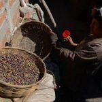 MAG: 30,000 manzanas de café afectados por erupción del Chaparrastique