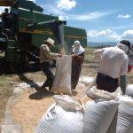 En Bolpros se negocian convenios como el del arroz. Foto EDH/