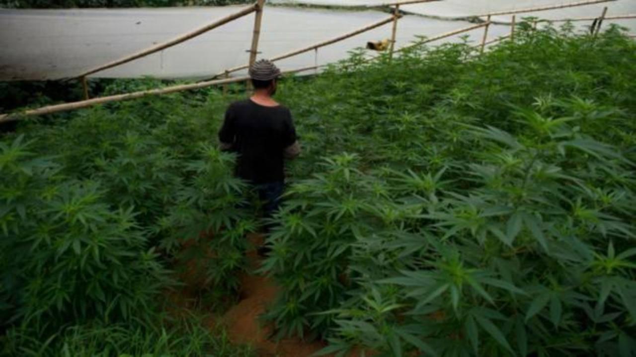 EE.UU. trabaja en leyes bancarias para la marihuana