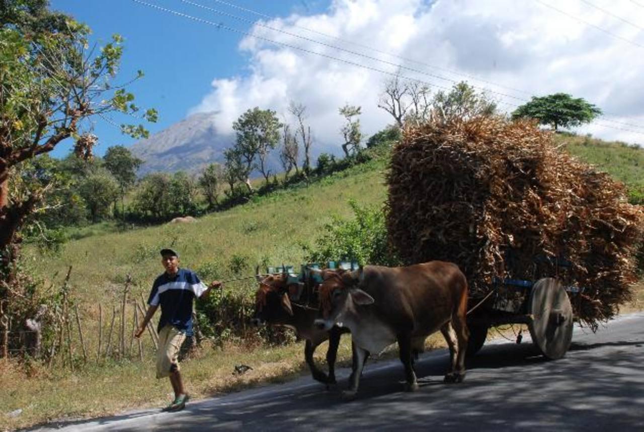 Luego de la erupción se recortó hasta en un 50 por ciento la contratación de jornaleros para realizar las cortas de café.