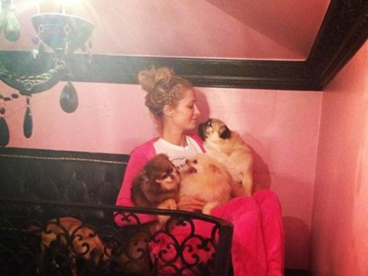 Video: Paris Hilton construye mansión para sus perritos