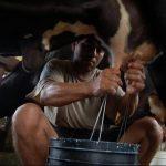 Los ganaderos de las faldas del volcán Chaparrastique, en San Miguel, resienten la reducción en producción lechera, según AGES. Foto/ Archivo