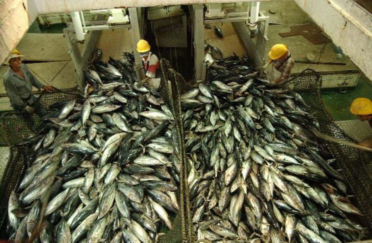 El atún será uno de los productos que empresarios estarán exportando al país caribeño. foto EDH / Archivo