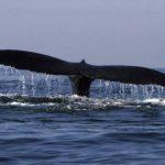"""Los tripulantes dijeron que el choque con la ballena fue """"repentino e inesperado"""". Foto/ Archivo"""