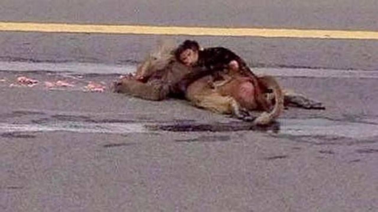 Mono abraza a su madre muerta y conmueve Arabia