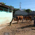 Desde la tarde del miércoles, quienes se dedican a destazar reses se quedaron sin lugar para hacerlo. fotos edh /insy Mendoza