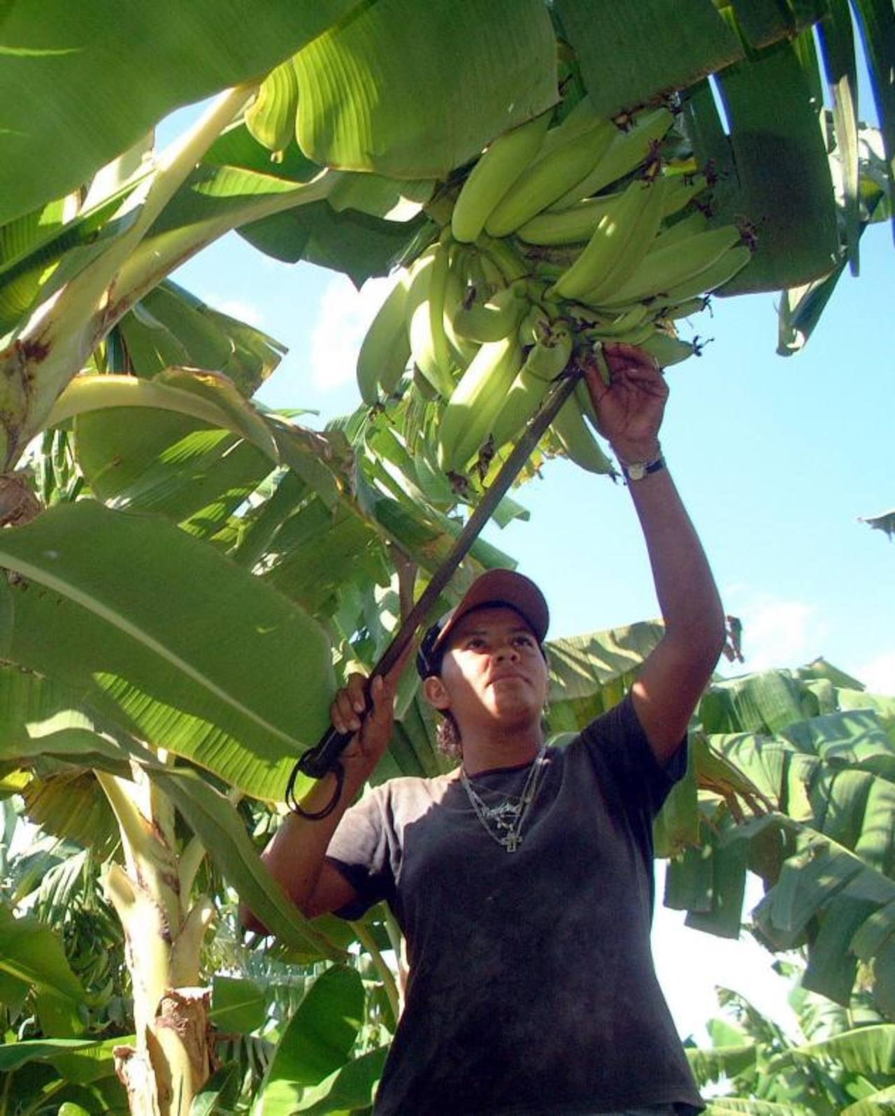 La producción de los agricultores asciende hasta las 10 millones de lempiras.