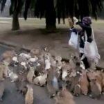 Video: Frenéticos conejitos persiguen a mujer en Japón
