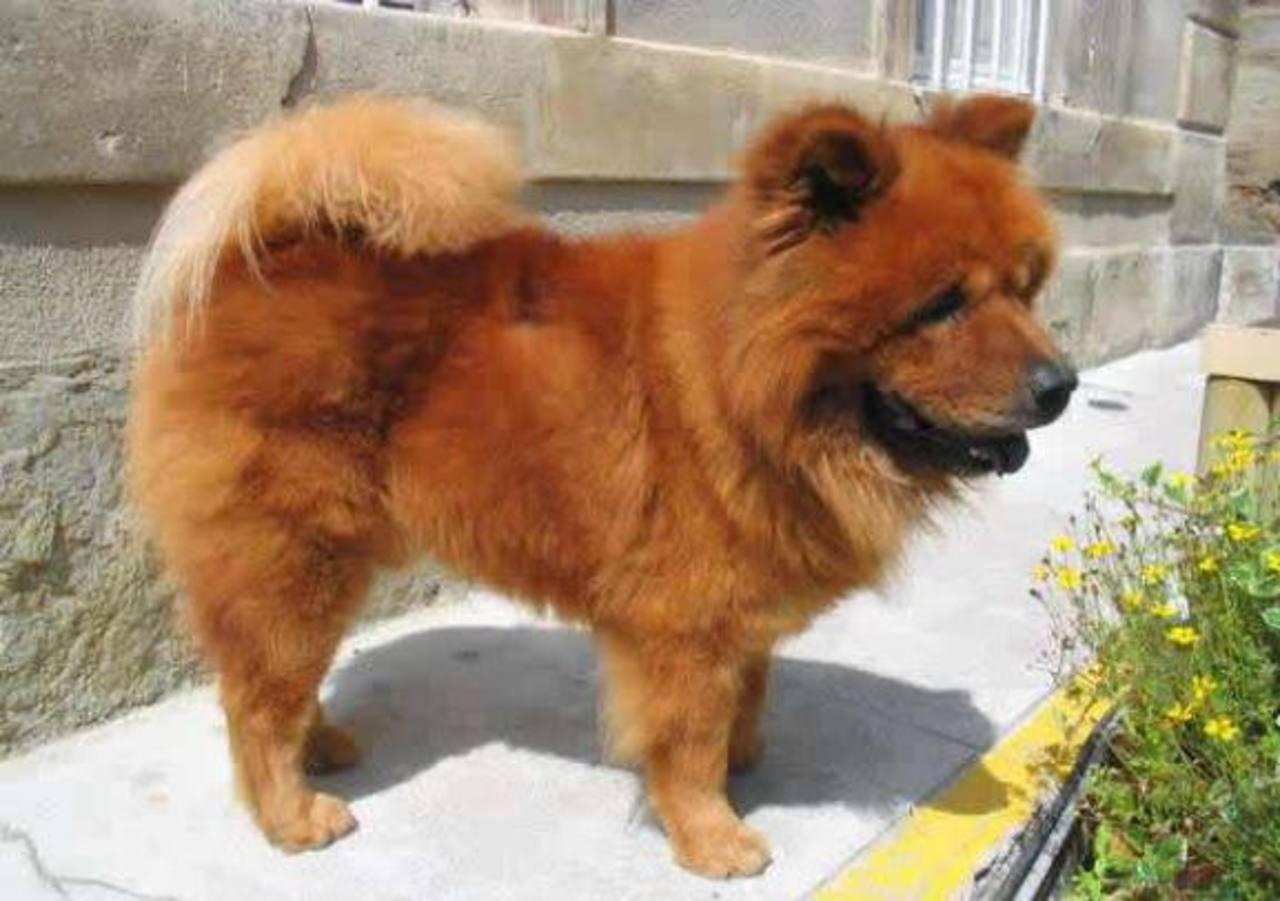 Mata a perro de vecinos y concilia por amenazas