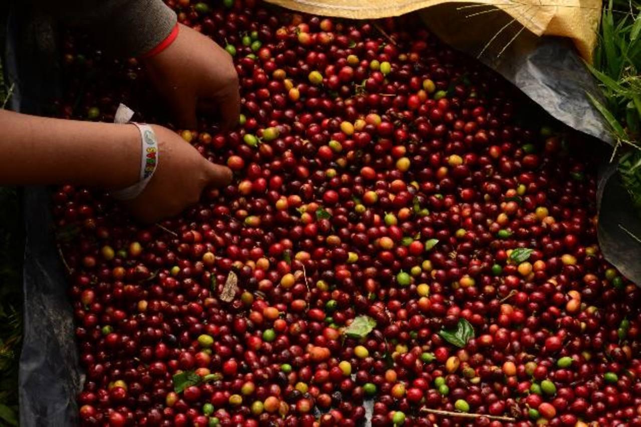 En febrero se contabiliza la venta de 315 mil quintales de la cosecha 2013-14. Foto edh / archivo