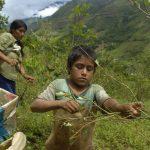 El Niño amenaza con volver y golpear producción mundial de alimentos