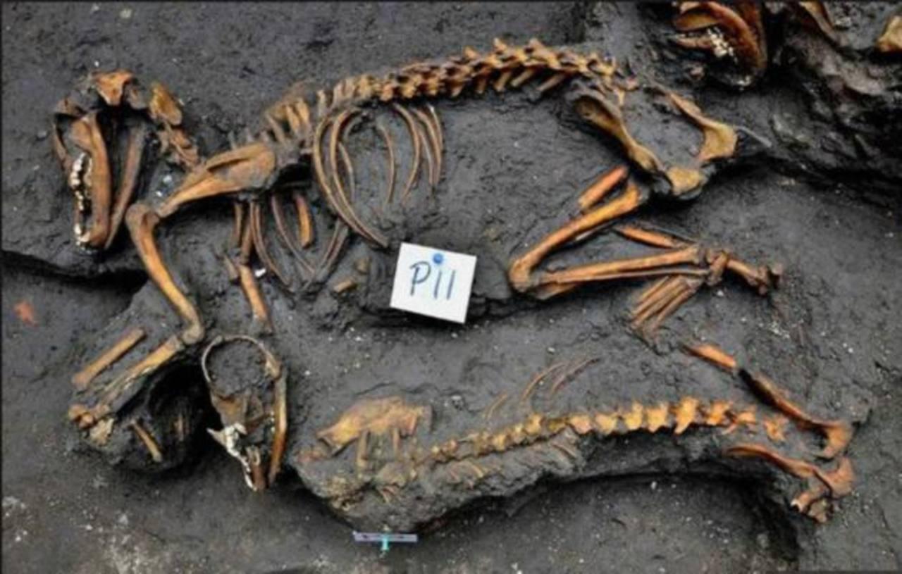 Hallan entierro prehispánicos de perros en México