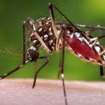 Costa Rica contabiliza mil 262 casos de dengue en lo que va de 2014