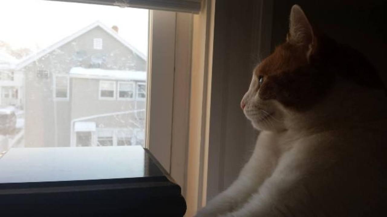 """El gato """"Coby"""" en Boston"""