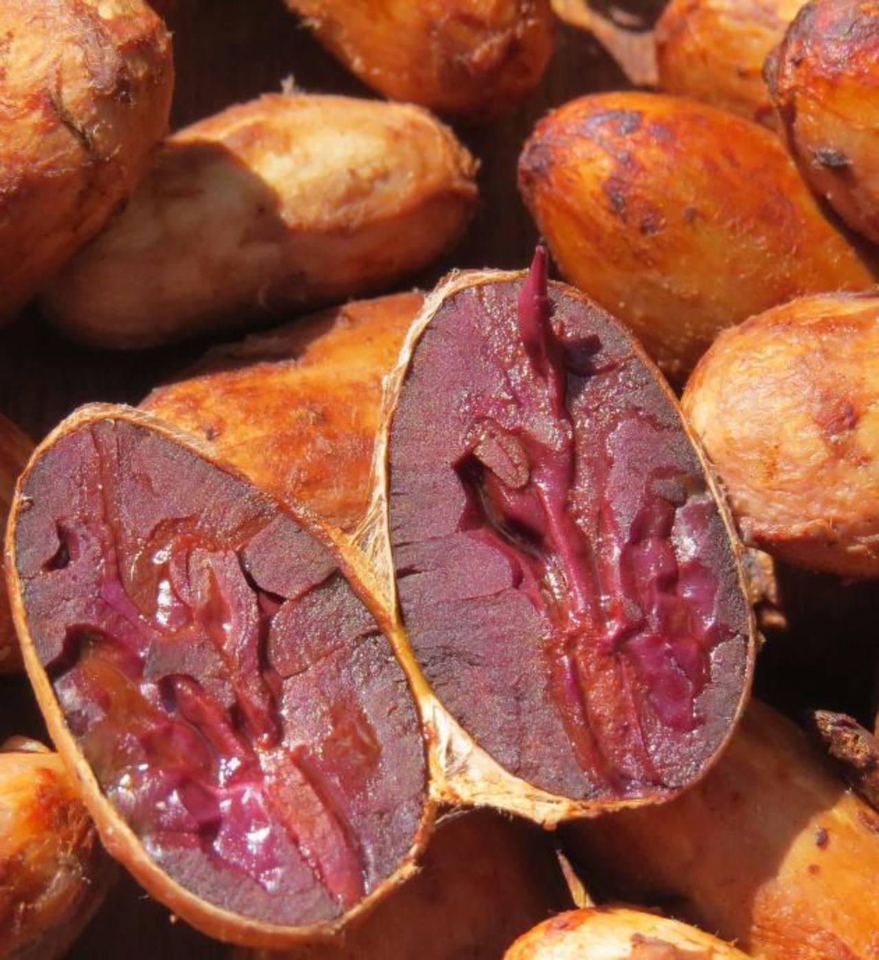 Mazorcas y almendra de cacao fino cultivadas con técnicas mejoradas, resistentes al clima y otros factores. EDH/cortesía