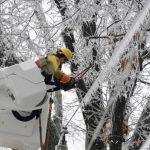 Una característica sobresaliente de esta tormenta fue la gruesa capa de hielo que cubrió árboles y cables de electricidad. Foto/ AP
