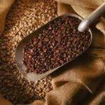 En el país se cultivan unas 280,000 hectáreas de café arábigo que cosechan unos 112,000 productores que enfrentan problemas de roya.