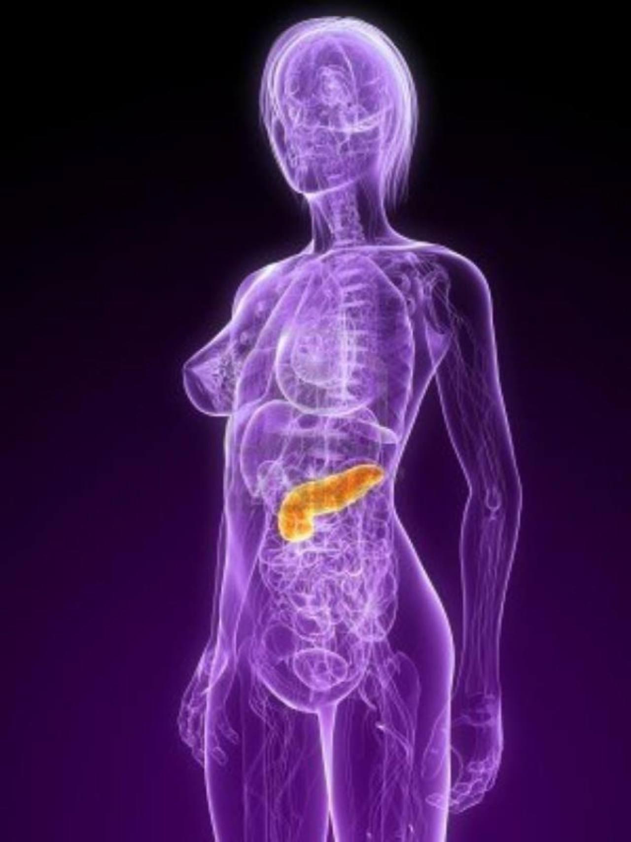 El bazo fue creado en tres dimensiones en un chip que es capaz de generar las mismas funciones dentro del organismo.
