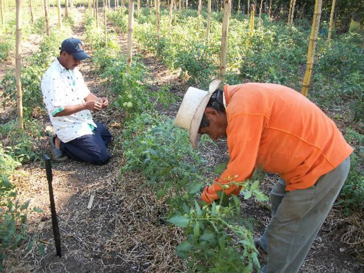 Los beneficiados residen en el cantón Peña Blanca, comunidad El Guacoco y Hacienda El Triunfo. Foto EDH / cortesía