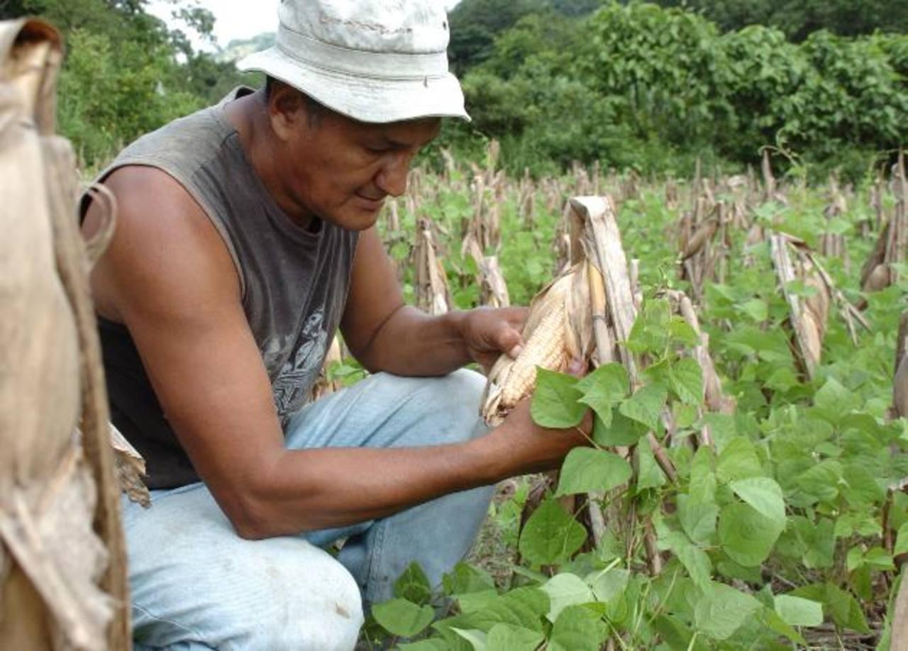 La CEPAL sugirió implementar estrategias de producción sostenible y adaptables al cambio climático. Foto EDH / archivo