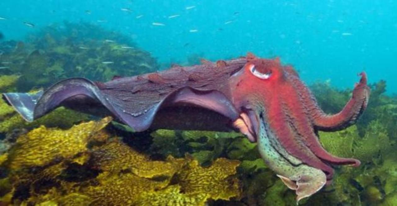 Fotos: Google Street View explora las costas de Australia