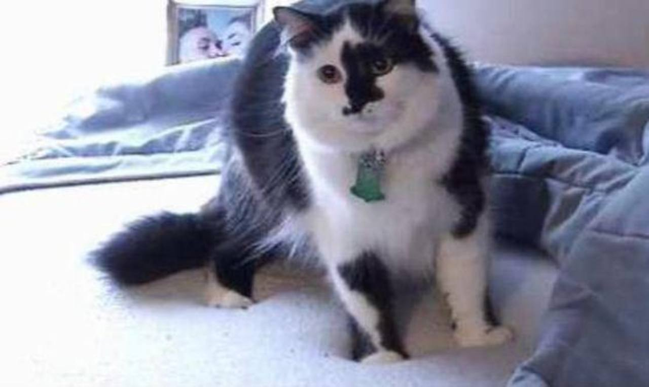 La Policía de Portland tuvo que ir a controlar al gato, que en un ataque de furia hizo que los dueños se refugiaran en la habitación de la casa. Foto tomada de internet