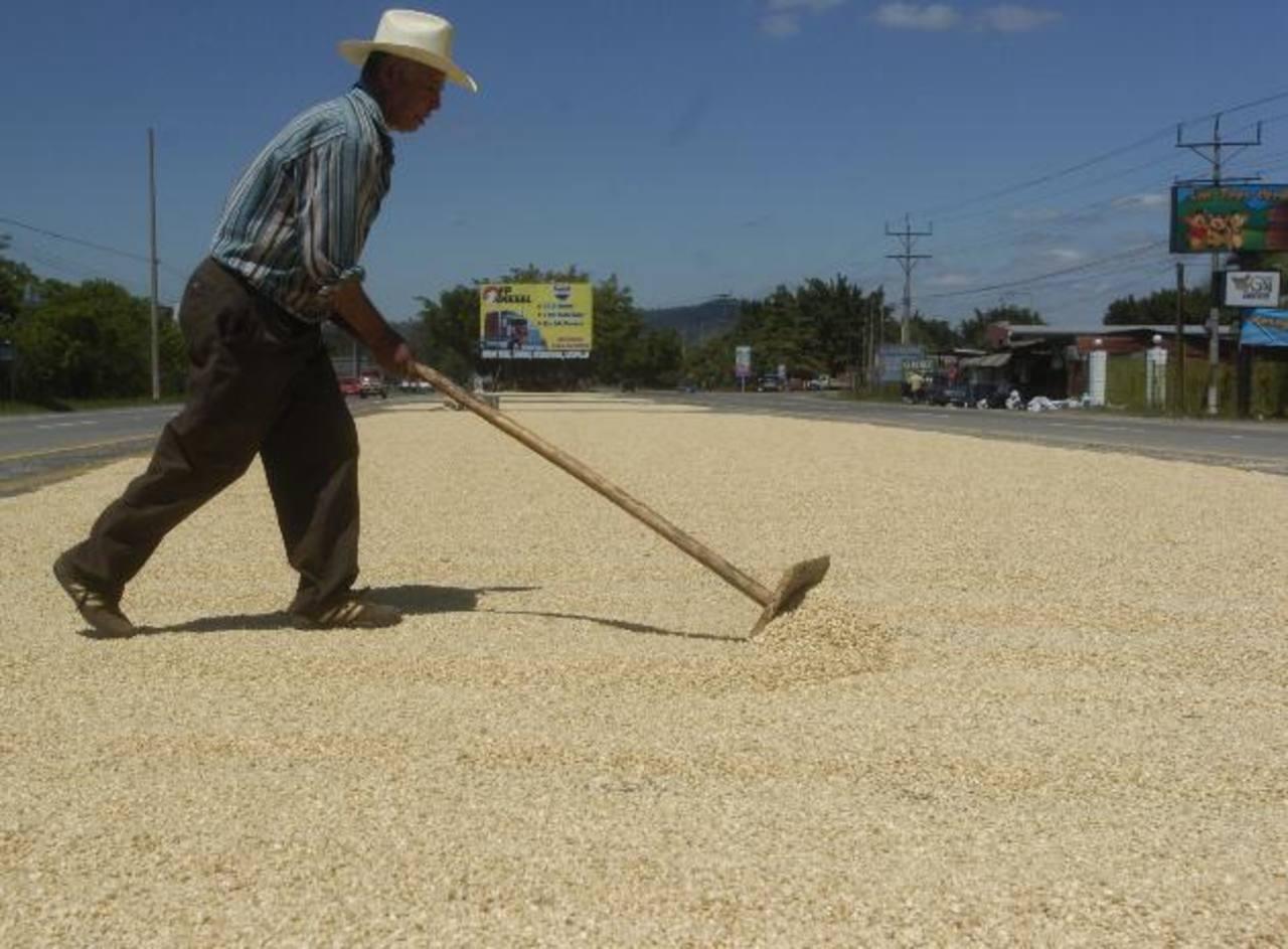 El maíz es base de alimentación en El Salvador. foto edh/ archivo