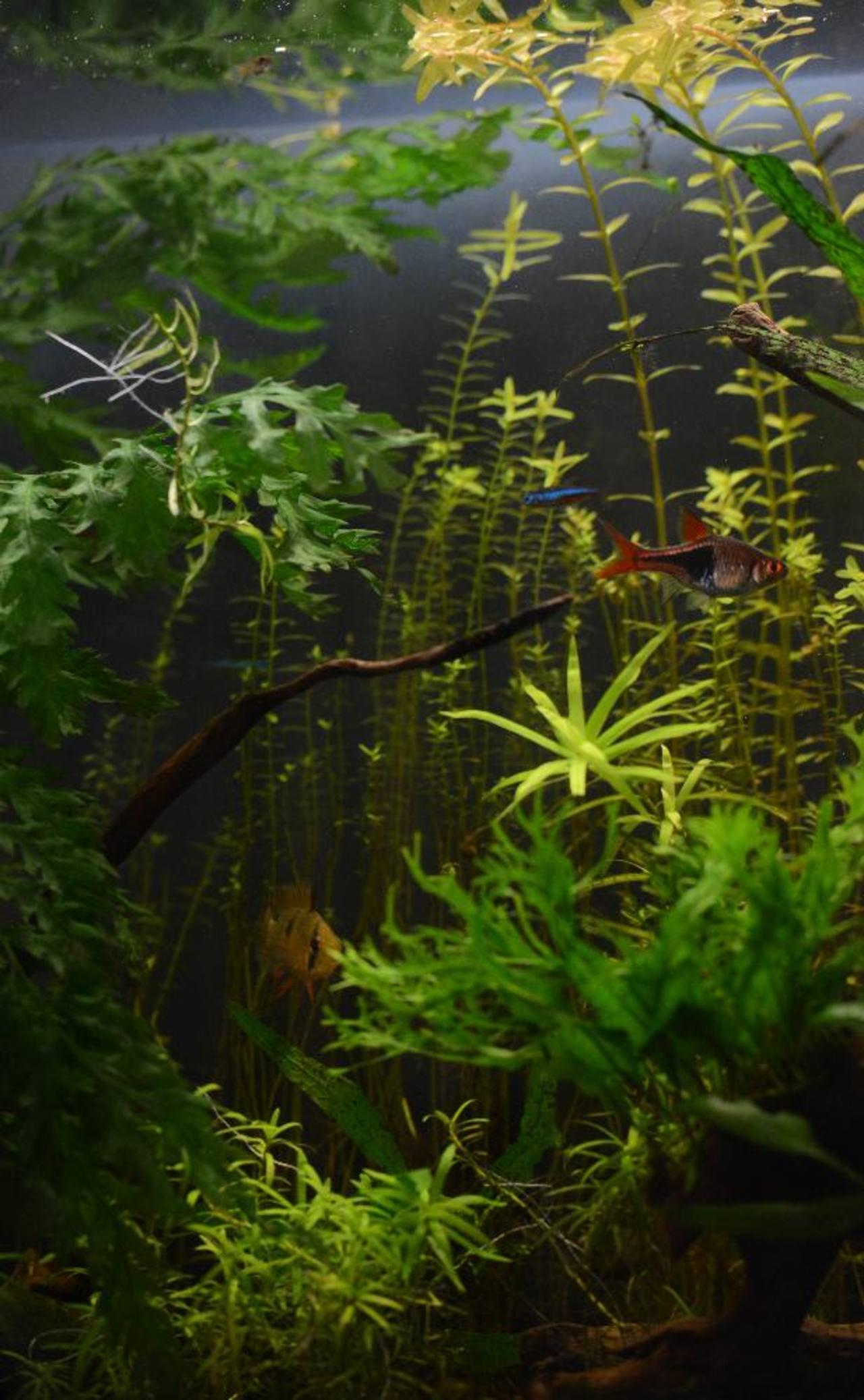 Imagen de un jardín acuático donde habitan peces y plantas de distintas especies.