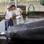 Caza de ballena en Japón. FOTO EDH Archivo.