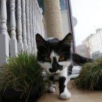 "Gato en el Lady Dinah""s Cat Emporium, Londres. Foto/ Reuters"