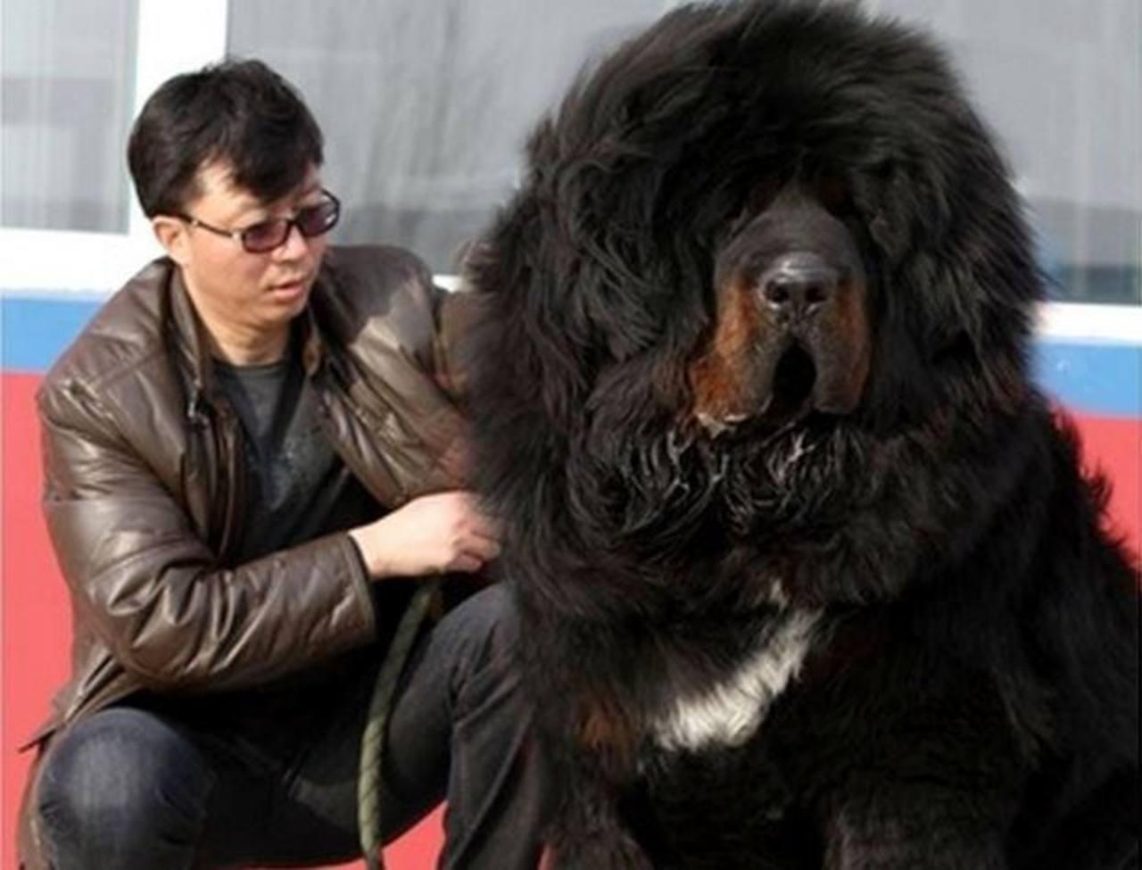 Venden perro en China por casi $2 millones