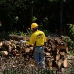 Trabajadores del MOP ordenan los troncos en el Infantil. Según datos de Secultura, dados meses atrás, en ese parque había uno 300 árboles y arbustos. Actualmente se cortan 140.