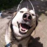 Video: Perrito parece sonreír al recibir masaje