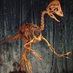 Esta imagen suministrada por el Museo de Historia Natural de Carnegie muestra una reconstrucción del esqueleto del dinosaurio Anzu wyliei. Foto/ AP