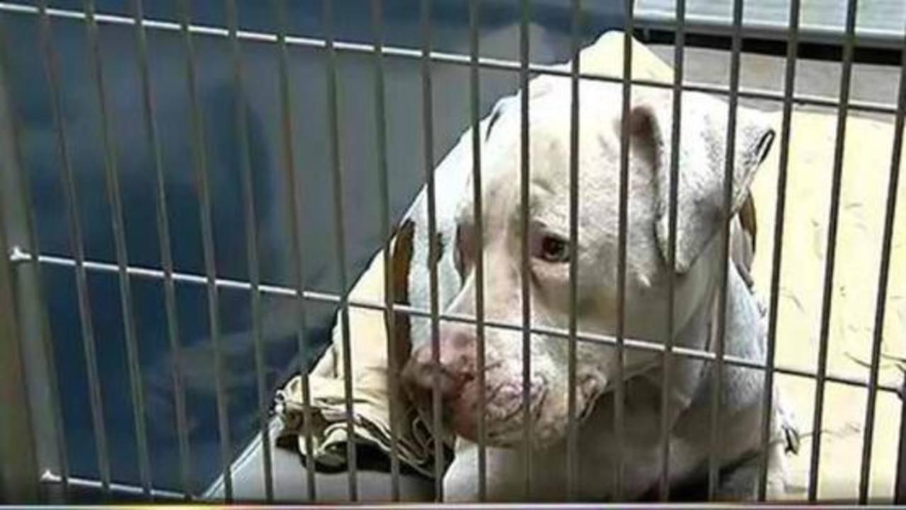 Campaña para salvar vida a perro en Arizona