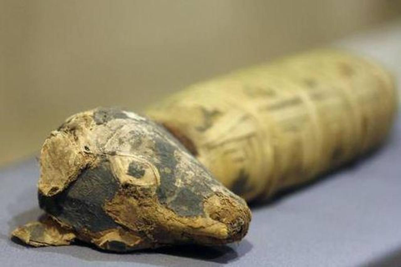 """Un perro momificado que es parte de la exhibición """"Criaturas entrañables: Momias animales en el Antiguo Egipto"""", en el Museo Bowers del condado de Orange, en Santa Ana, California. Foto/ AP"""