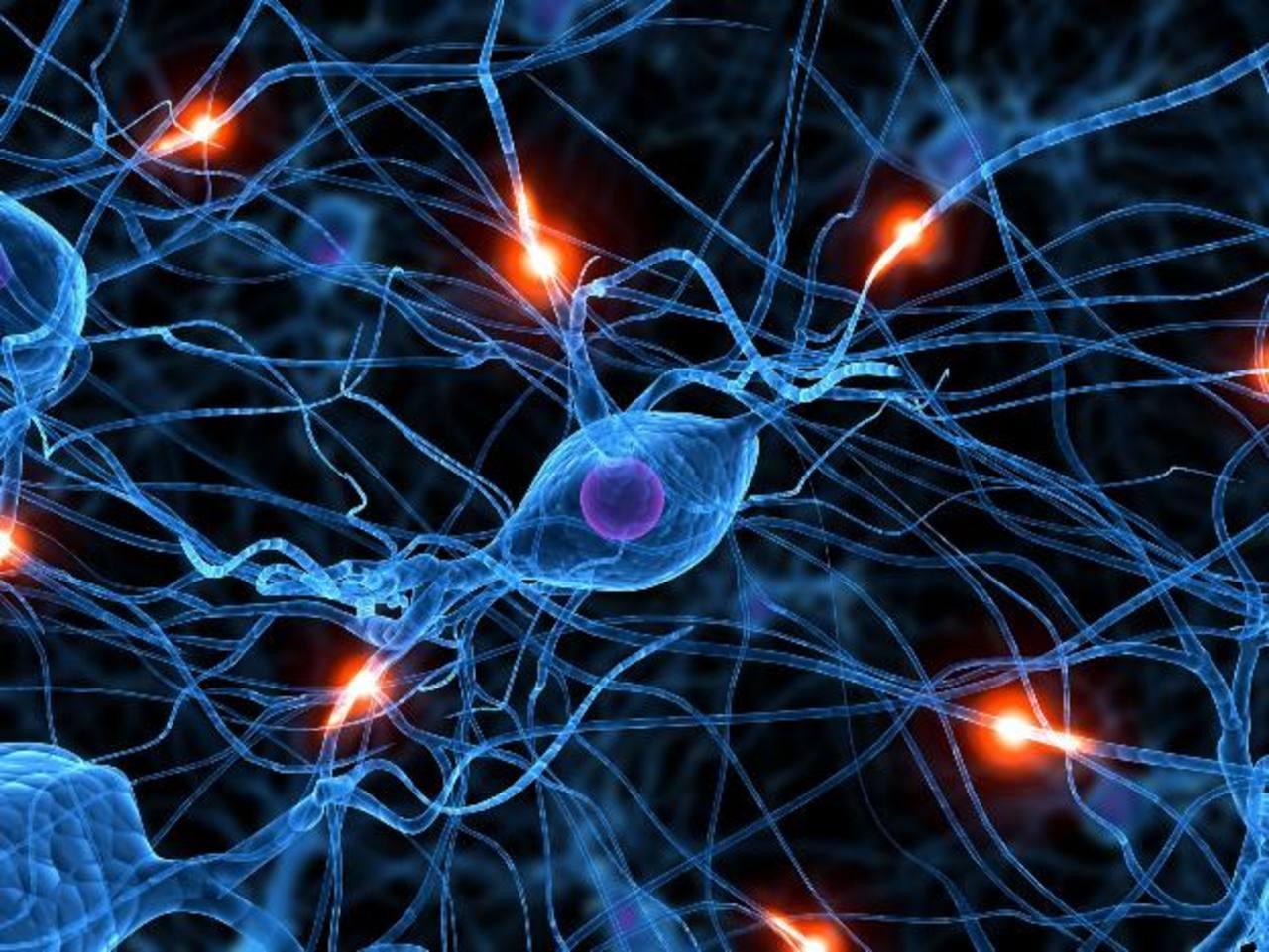 La reducción de la corteza cerebral se relaciona con una disminución significativa del coeficiente de inteligencia. foto edh