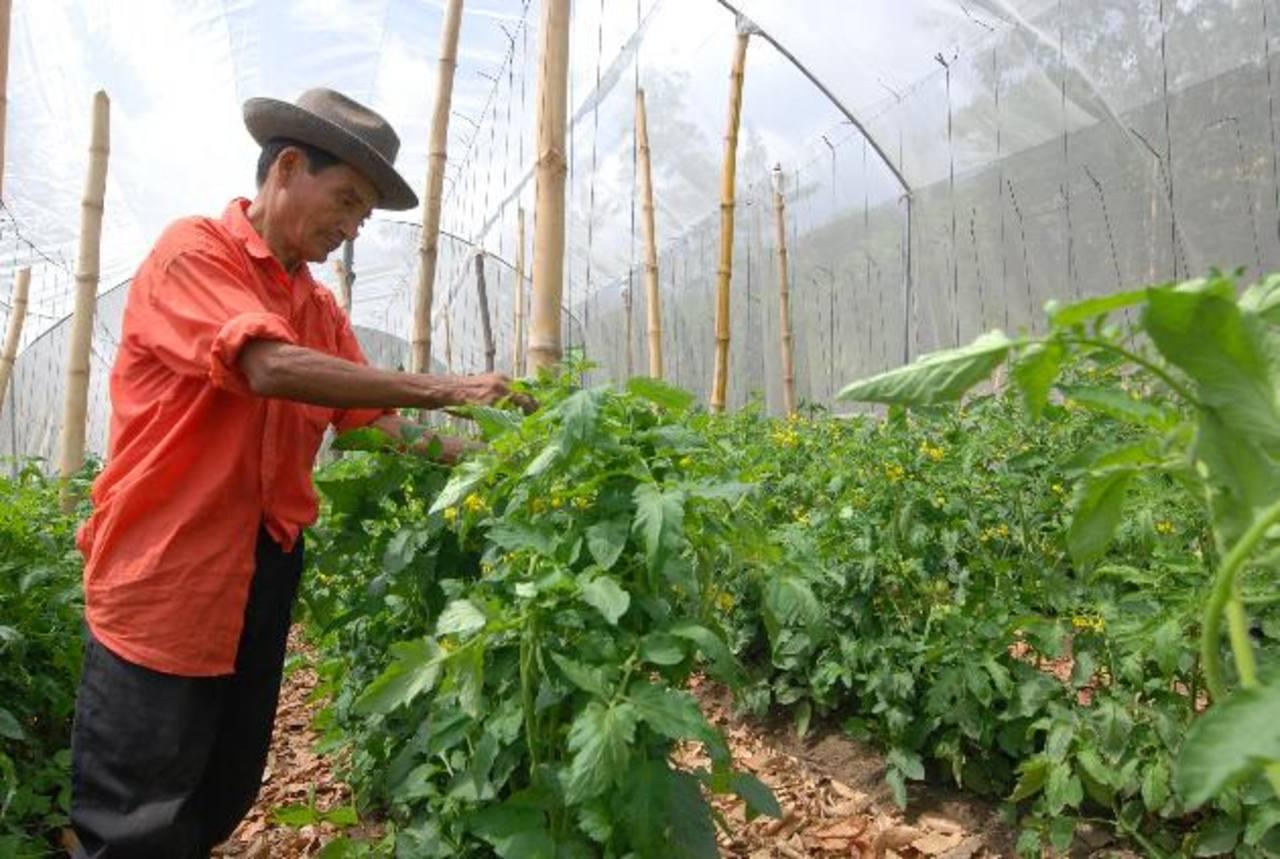 Diversifican cultivos para cuidar cuenca lago Coatepeque