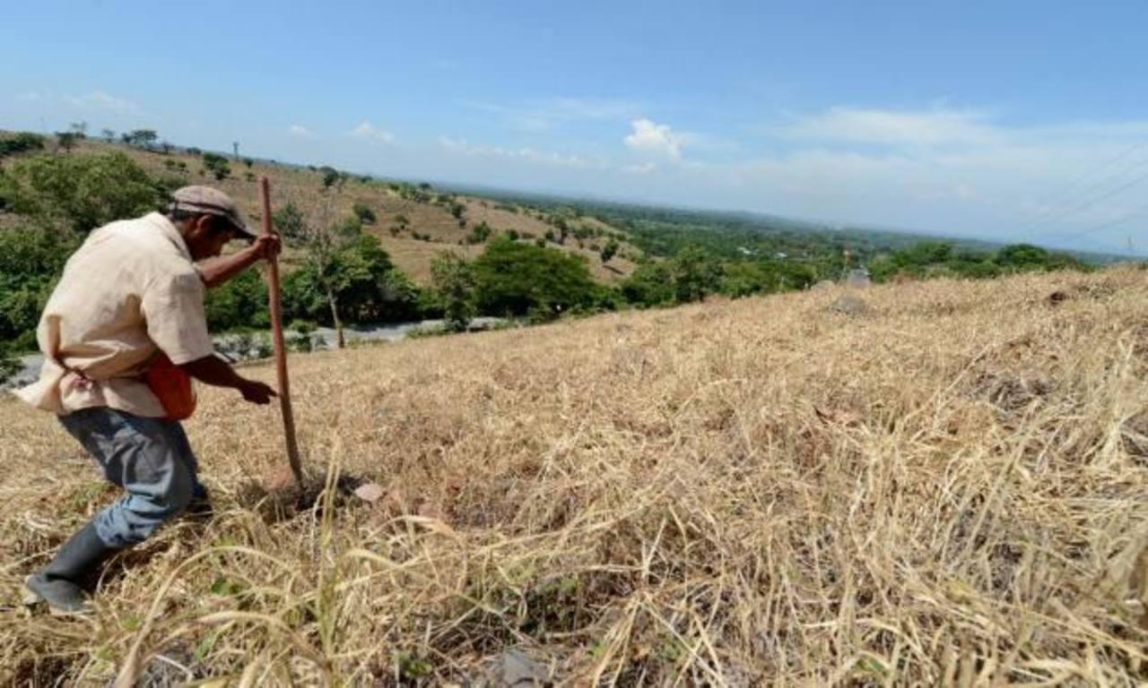 PMA: Se necesitan $75 millones para atender a los afectados por sequía en C.A.