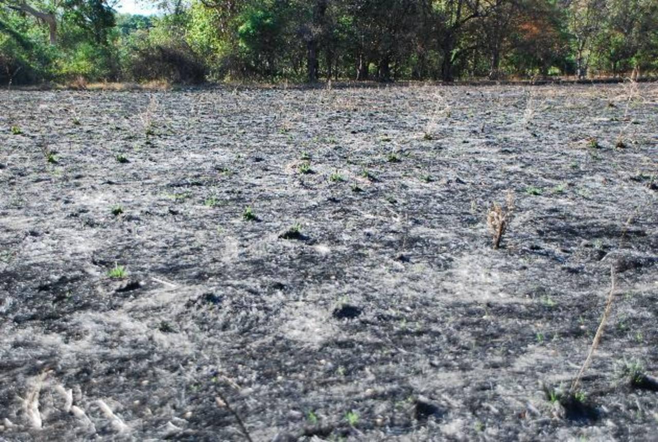 Con la quema de maleza los terrenos quedan arrasados; a inicios de febrero en cantón Tecomatal, son al menos 50 manzanas que fueron afectadas. Foto edh / JENNY VENTURA.