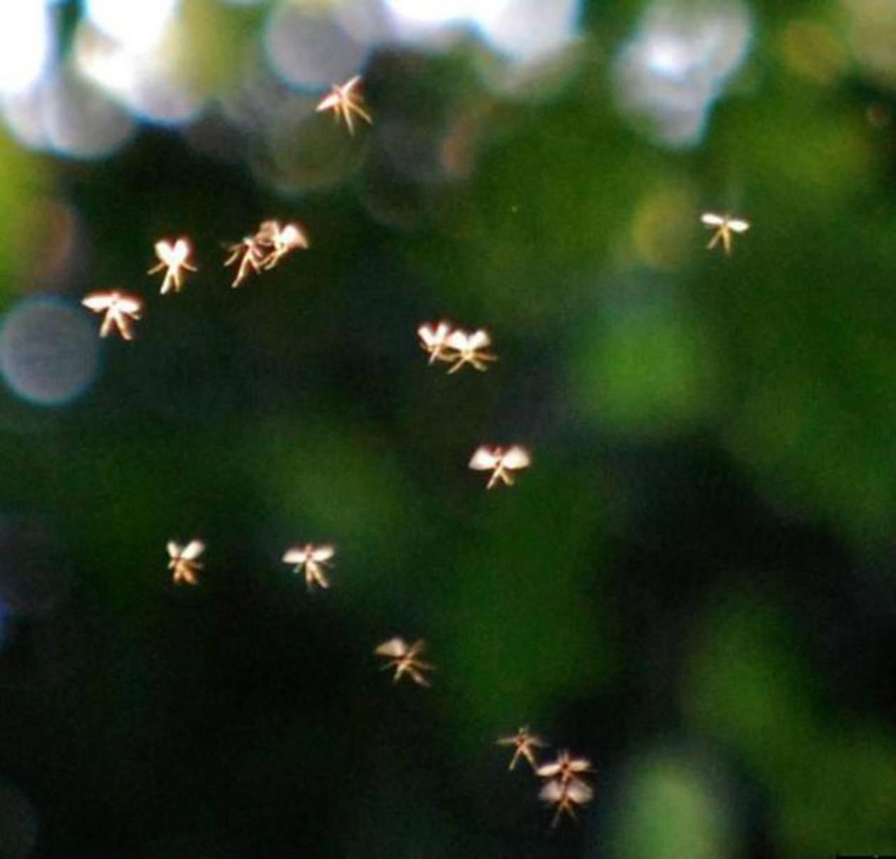 ¿Campanita?, captan en foto diminutas figuras voladoras con apariencia humana