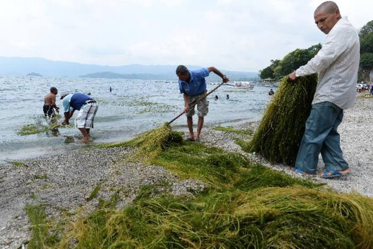 En la jornada de limpieza en el Lago de Ilopango participaron cerca de 600 personas, quienes retiraron una gran cantidad de desechos. Foto edh/ Marlon Hernández