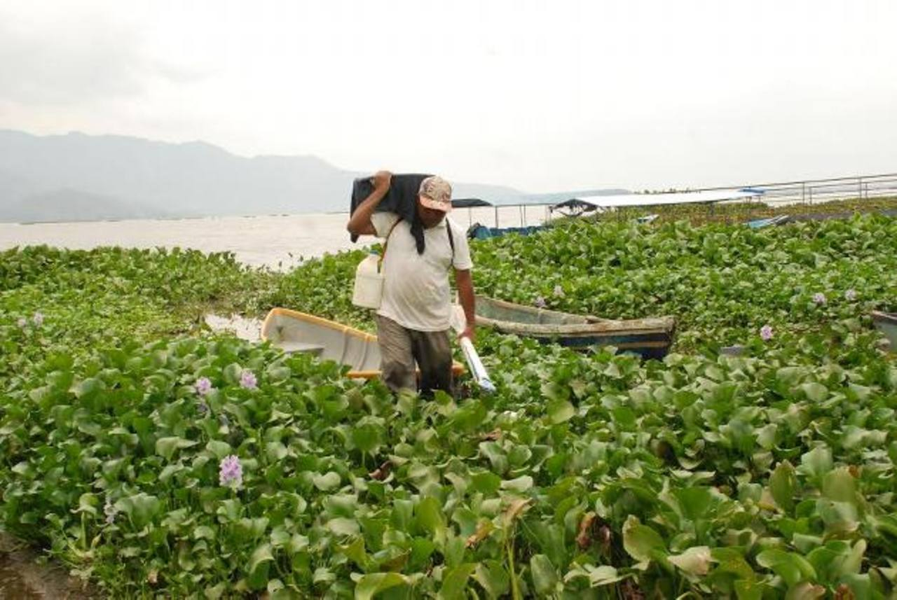 La ninfa afecta a los pescadores y lancheros que hacen paseos en la zona. Foto EDH / archivo.