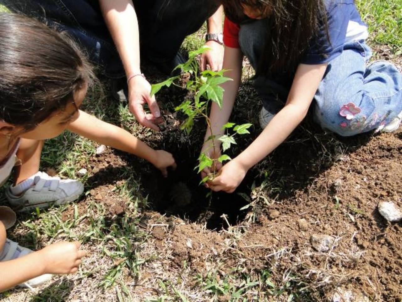 La siembra de arbolitos inculca el respeto al medio ambiente.